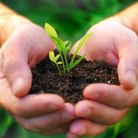 Plantación de plantas
